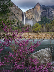 Bridalveil Fall and Redbud