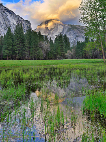 Half Dome Flooded Meadow