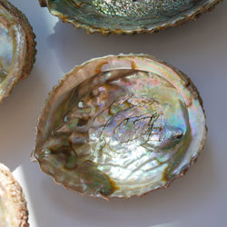 coquille d'ormeau