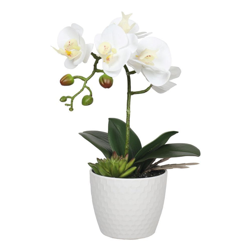 Potted Single Stem White Phalaenopsis Orchid with Decorative Pot 35cm