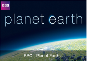 Aeroture Michael Haluwana Working on BBC Planet Earth II Project