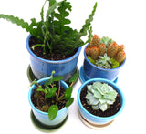 "Blue and Green Starter Plant Pot 3.5""h x 3.25""w"