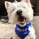"""DESIGN YOUR OWN (Blue)"" - Dog bandana with embroidery"