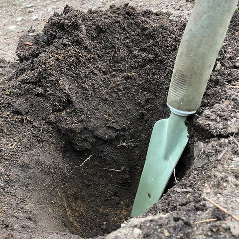 A hole about 8-inches deep in a garden with a hand shovel in it for scale
