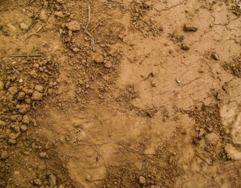 Clay soil is a surface Tertill the weeding robot can work on - just atch out for mud build-up on the wheels