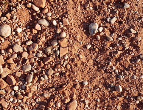 Soil with small rocks in it can be home to a Tertill weeding robot