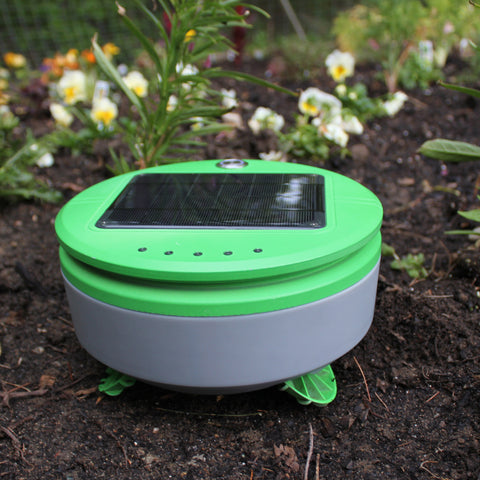 Tertill the weeding robot weeds in a DIY home garden.