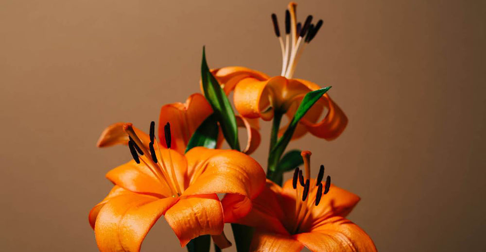 Orange lilies symbolizing fertility
