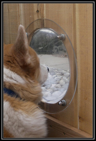 Image of Pet Fence Bubble Window