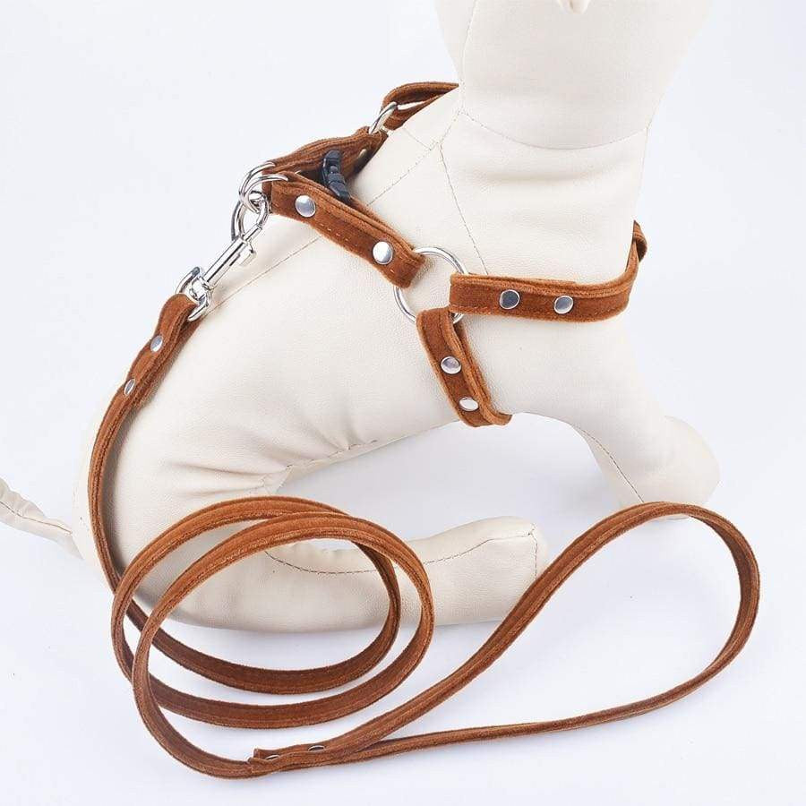 Dog Harness Leash Sets For Small Medium Dogs - uspetsuperstore