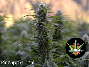Pineapple Thai Stick