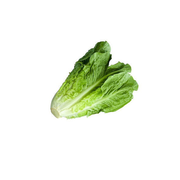 LETTUCE - ROMAINE GREEN