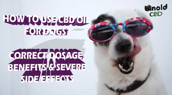 How to use CBD oil for dogs dosage benefits side effects treats organic best