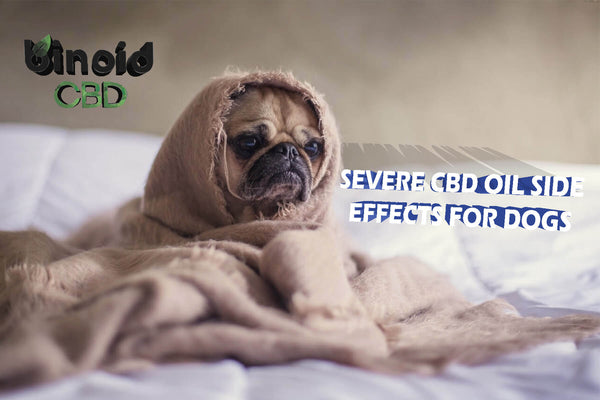 What are Severe CBD Oil Side Effects For Dogs pain anxiety sleep drowsiness itchiness vomiting