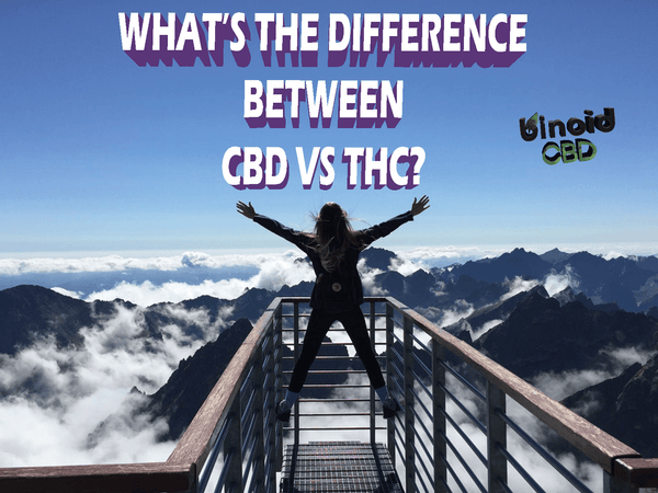 CBD vs. THC: Major Differences, Similarities & Benefits
