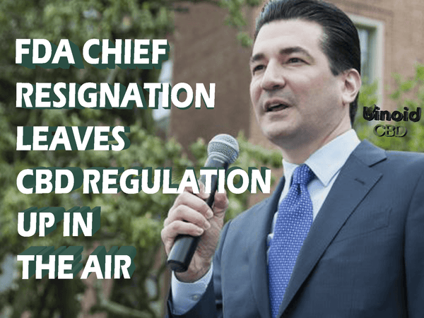 CBD oil legal regulation put on hold with FDA head chief Scott Gottlieb resignation
