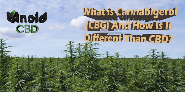 What is CBG Cannabigerol and why is it different than CBD cannabidiol
