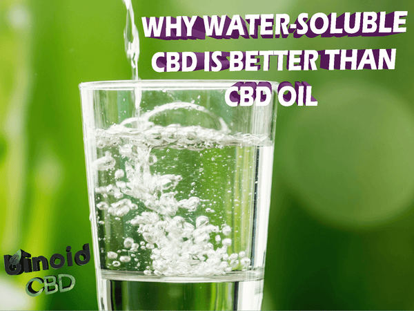 What is Water Soluble CBD is better than CBD oil