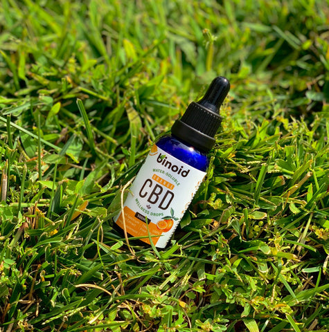 How to take water soluble CBD in mouth phytocannabinoids