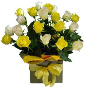 1 dozen White and Yellow Roses in a Box