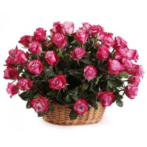 2 dozen Pink Holland Roses in a Basket