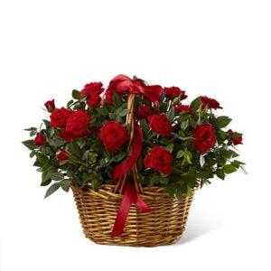 2 dozen Red local Roses in a Basket