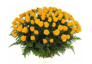 3 dozen Yellow Roses in a Basket
