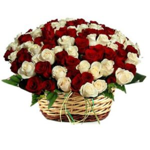 4 dozen Red and White Roses in a Basket
