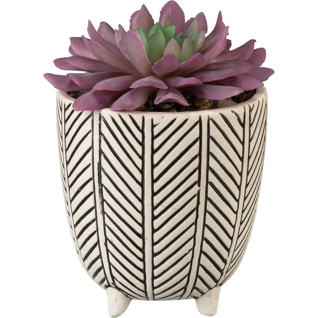 Succulent With Pot - Meyer's Market