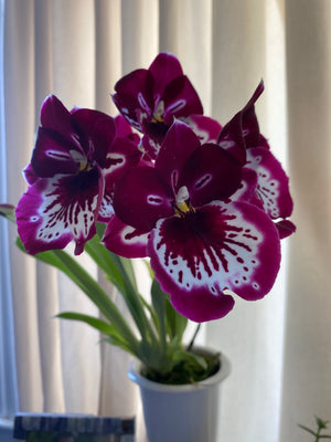 FINY Exotic Orchid Sale