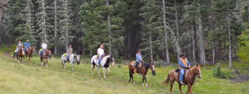 Exploring the Sangre De Cristo Mountains by horseback.