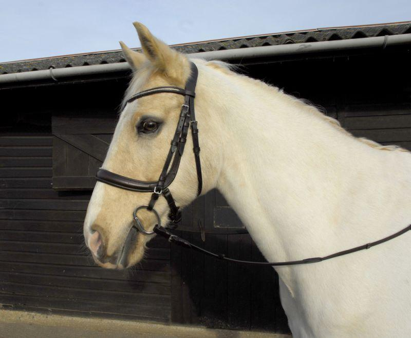 Heritage Anatomical Cavesson Bridle - Jacks Pet and Country