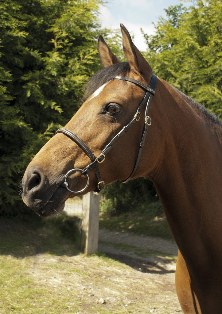 Heritage English Leather In-Hand Bridle - Jacks Pet and Country