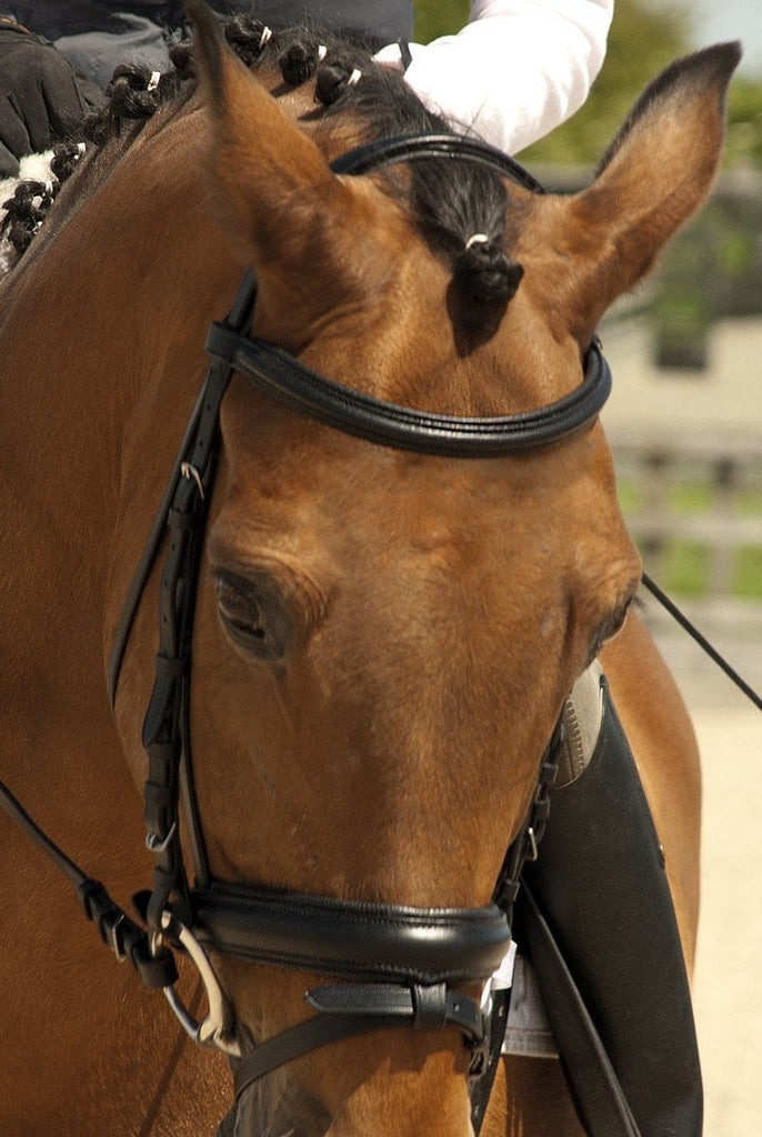 Rhinegold German Leather Comfort Bridle with Flash Noseband - Jacks Pet and Country