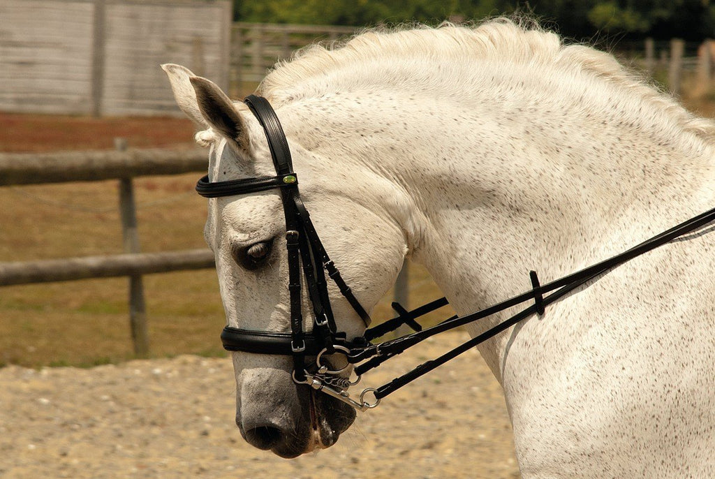 Rhinegold German Leather Comfort Double Bridle - Jacks Pet and Country