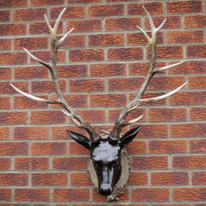 Large Stag Head Wall Bust against a brick wall.