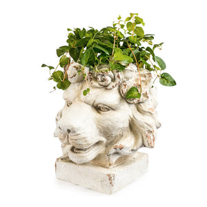 Large Stone Effect Lion Planter with plant.