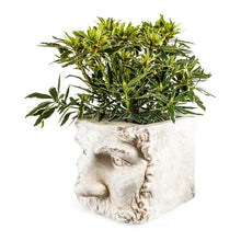 Load image into Gallery viewer, Large Stone Effect Classical Face Planter.