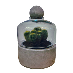 Concrete & Glass Terrarium Small. Concrete base with a glass cloche and concrete ball on top.