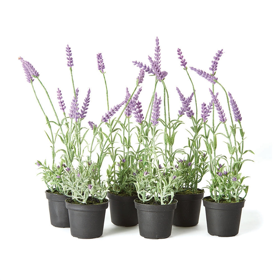 "French Lavender 13""h"