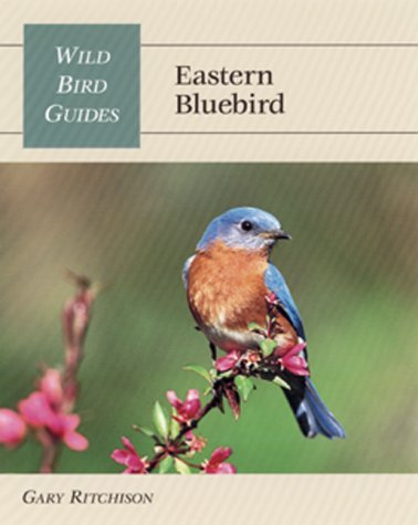 Wild Bird Guide: Eastern Bluebird (Wild Bird Guides)
