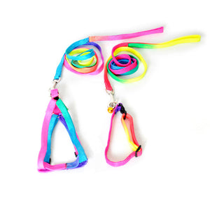 Colorful Harness and Leash