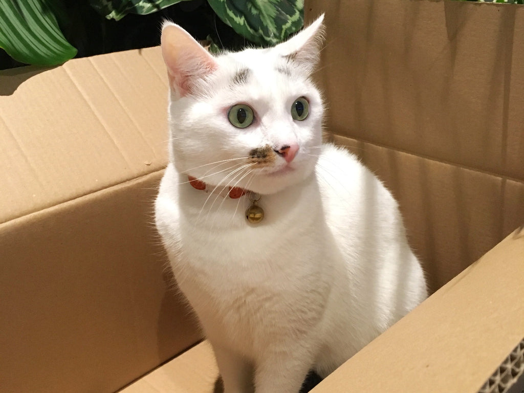 So, Why Do Cats Like Boxes So Much?