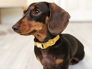 What are Vegan Dog Collars and Why Should I Choose a Vegan Collar for my Cat or Dog?