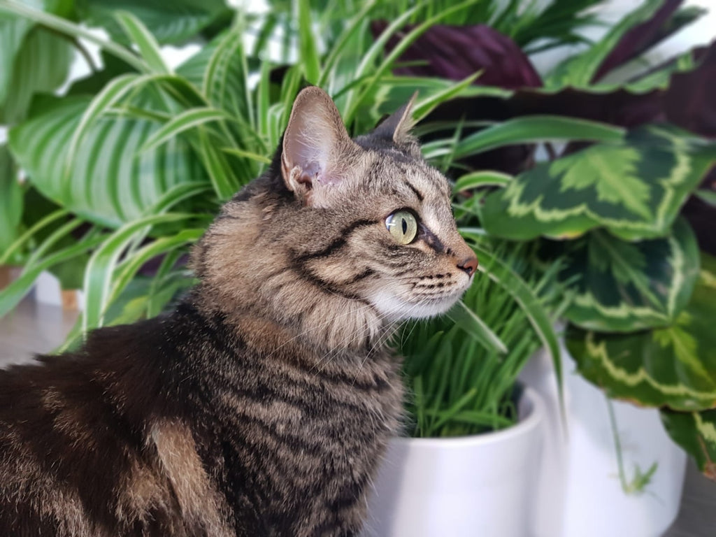 What Houseplants Are Safe for Cats - Pets, Plants and Purification