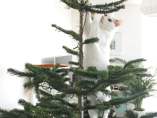 Cats and Christmas - cat climbing Christmas tree