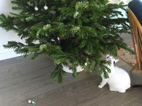 Cats and Christmas tree decorations