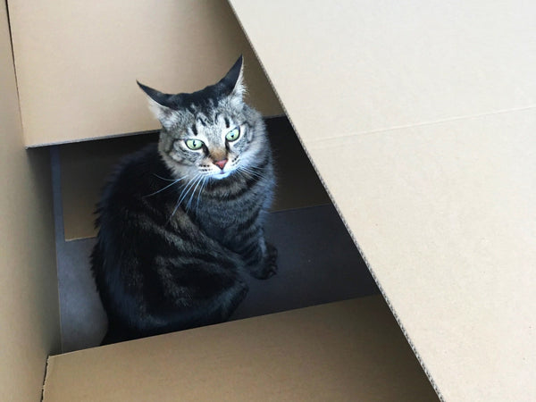 Why do cats like boxes so much? Noggins in one of our biggest boxes!