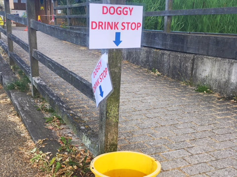 Dog water bowl in London to help keep your dog hydrated in the summer