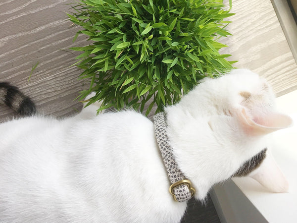 Some varieties of bamboo are safe for cats